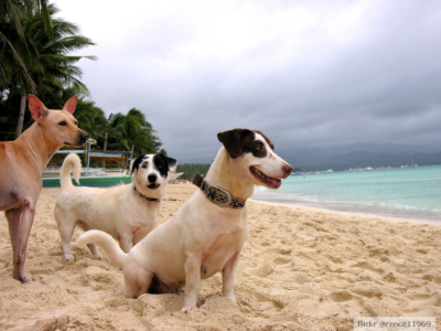 Friendly And Cuddly Dogs By The Boracay Beach